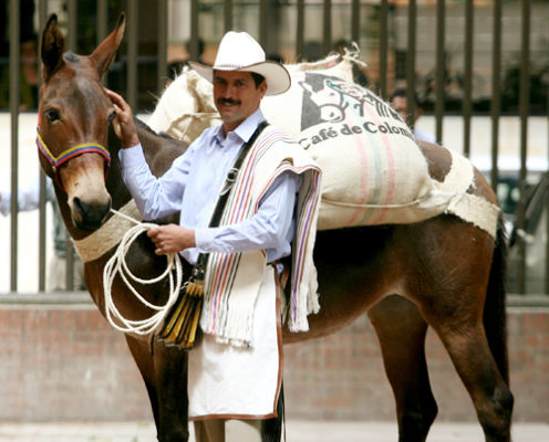 """Carlos Castaneda, who was named Colombia's new Juan Valdez, poses with """"Conchita"""" during news conference in Bogota"""